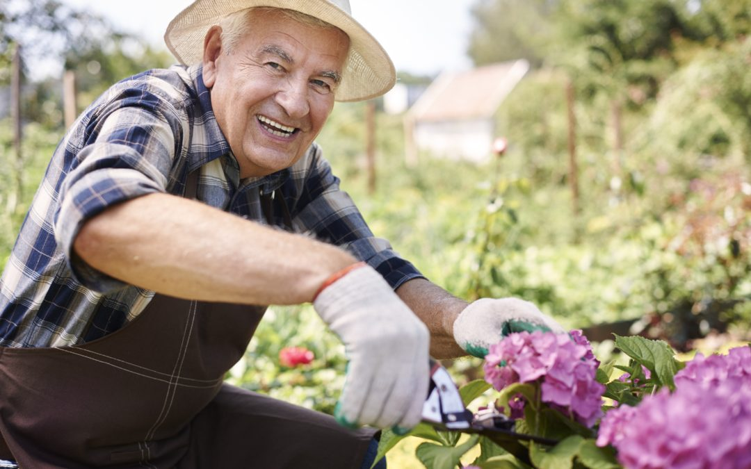 6 Summer Activity Options for the Aging Adult